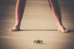 Crab faces a human on a beach. Just like David faced Goliath, face your fears.