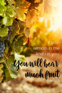 """Grape vines in the sunset. Text overlay """"If you remain in me And I in you; you will bear much fruit"""" John 15:5"""